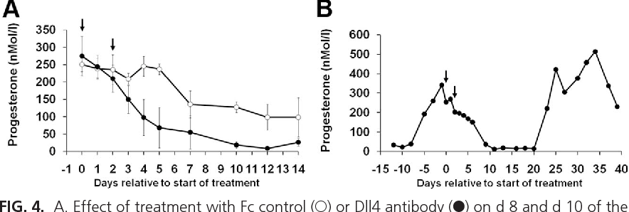 FIG. 4. A. Effect of treatment with Fc control (E) or Dll4 antibody (F) on d 8 and d 10 of the luteal phase on plasma progesterone concentrations. Dll4 antibody treatment was associated with a significant suppression of progesterone on d 4 and d 5 after treatment. B, A representative progesterone profile from a marmoset treated with Dll4 antibody to show luteal regression was followed by a follicular phase of normal duration and progesterone secretion associated with normal ovulation (n 4 per group). Numbers are means SEM.