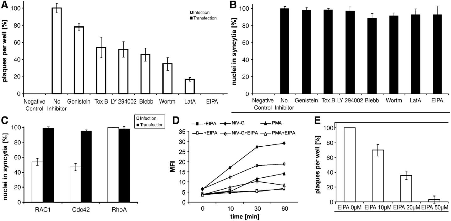 8 Figure6 1 figure 6 from nipah virus entry can occur by macropinocytosis