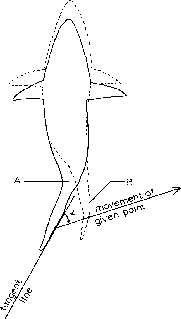 Studies In Locomotion And Anatomy Of Scombroid Fishes Semantic Scholar