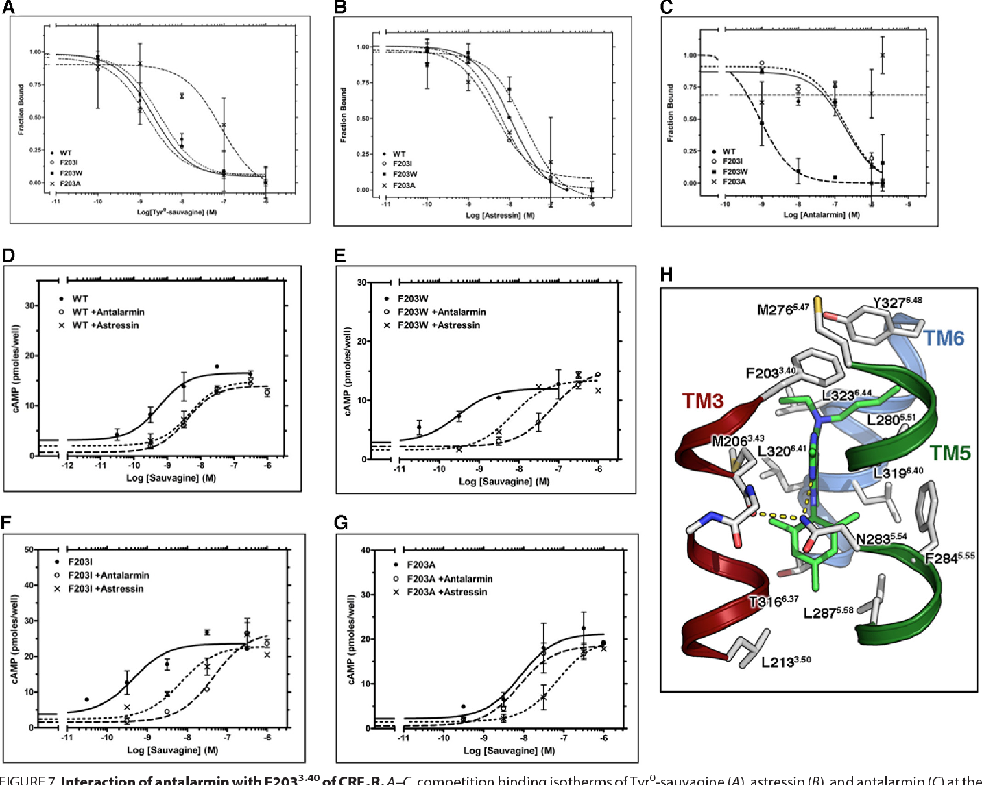 FIGURE 7. Interaction of antalarmin with F2033.40 of CRF1R. A–C, competition binding isotherms of Tyr 0-sauvagine (A), astressin (B), and antalarmin (C) at the WT CRF1R and its F203 3.40A, F2033.40I, and F2033.40W mutants. The means and S.E. (duplicate determination) are shown from a representative experiment performed 3– 6 times with similar results. The affinities of 125I-Tyr0-sauvagine (%logKD), astressin (%logKi), and antalarmin (logKi)), determined from these experiments, are given in Table 2. D–G, stimulation of cAMP accumulation in HEK293 cells expressing WT (D), F2033.40W (E), F2033.40I (F), or F2033.40A (G) by sauvagine in the absence or presence of 0.3$M astressin or 1–2$M antalarmin. The means and S.E. (duplicate determination) are shown from a representative experiment performed 3–10 times with similar results. The potencies (%logEC50) of sauvagine without or with antalarmin or astressin, determined from these experiments, are given in Table 2. H, molecular model of the complex between antalarmin and CRF1R. The ethyl groups of the ligand interact with F203 3.40, the aromatic ring interacts with M2063.43 and N2835.54, and the methyl groups of the terminal aromatic ring are located in a hydrophobic pocket of the receptor.