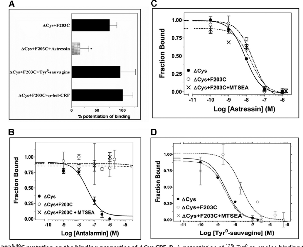 """FIGURE 3. Effect of F2033.40C mutation on the binding properties of !Cys CRF1R. A, potentiation of 125I-Tyr0-sauvagine binding to """"Cys & F2033.40C by MTSEA after pretreatment of cells expressing this receptor without or with 1 $M astressin, 1 $M Tyr0-sauvagine, or 1 $M !-helical (9 – 41) CRF (!-hel-CRF). The bars indicate the mean ' S.E. values from 2 to 7 independent experiments. Hatched bar with asterisk indicates that MTSEA potentiation of binding to """"Cys & F2033.40C was significantly inhibited after pretreatment of receptor with ligand (p( 0.05; one-way ANOVA). B–D, competition binding isotherms of antalarmin (B), astressin (C), and Tyr0-sauvagine (D) at the """"Cys CRF1R, its substituted Cys mutant, """"Cys & F203 3.40C, and the MTSEA-treated """"Cys & F2033.40C. The means ' S.E. (duplicate determination) are shown from a representative experiment performed 3– 6 times with similar results. The affinities (%logKi) of antalarmin, determined from these experiments, are 7.32 ' 0.05, (5.00 and (5.00, for """"Cys, """"Cys & F2033.40C, and MTSEA-treated """"Cys & F2033.40C, respectively. The affinities (%logKD) of 125I-Tyr0-sauvagine, are given in Table 1. The affinities (%logKi) of astressin are 8.00' 0.10, 7.58' 0.19, and 7.54' 0.27, for """"Cys, """"Cys & F2033.40C, and MTSEA-treated """"Cys&F2033.40C, respectively."""