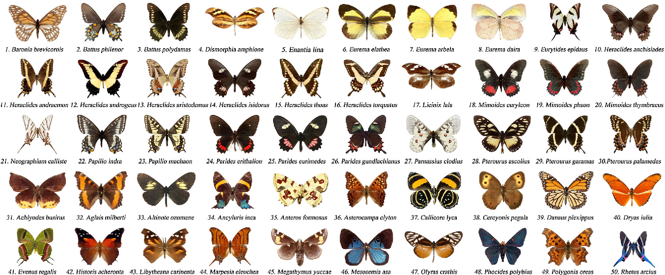 automatic identification of butterfly species based on homsc and