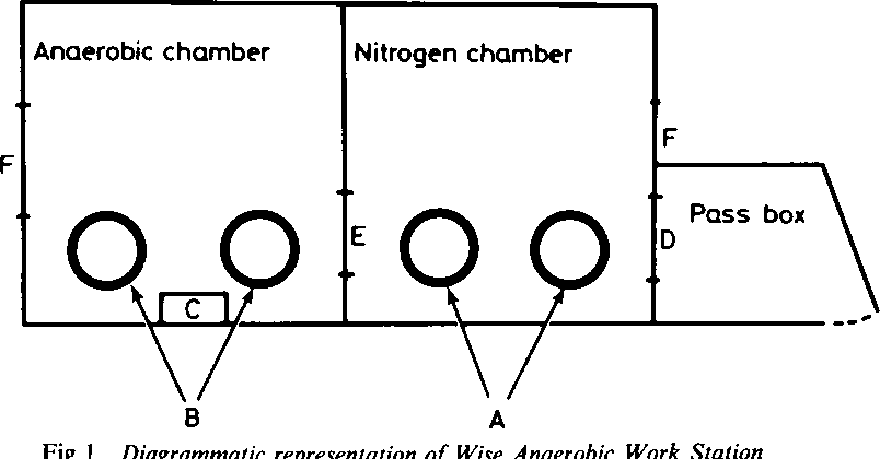 2 FigureI 1 table 2 from wise anaerobic work station anaerobic chamber * qrnp