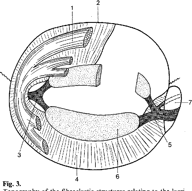 New Concepts Of The Anatomy Of The Lacrimal Apparatus Semantic Scholar